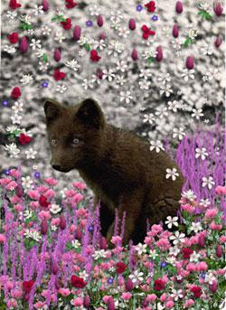 Bucky in Flowers I