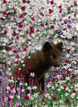 Bucky in Flowers II
