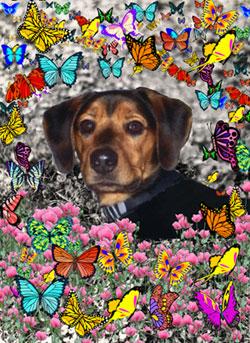Chase in Butterflies
