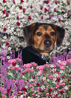 Chase in Flowers