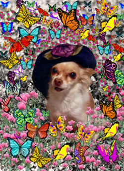 Chi Chi in Butterflies
