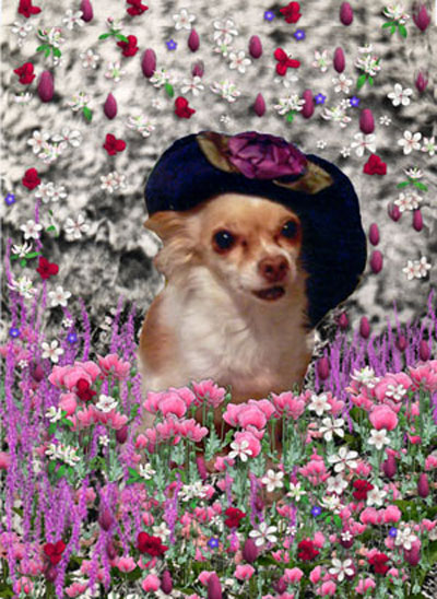 Chi Chi in Flowers, Chihuahua with a hat in flowers
