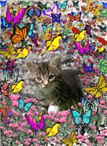 Emma in Butterflies