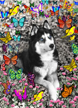 Irie in Butterflies