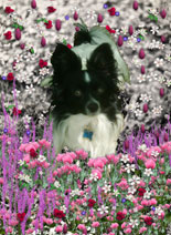 Matisse in Flowers I