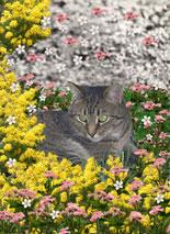 Mimosa in Minosa Flowers