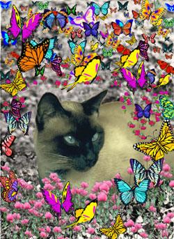 Stella in Butterflies