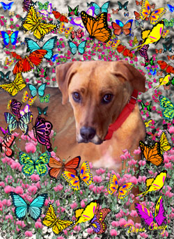 Trista in Butterflies