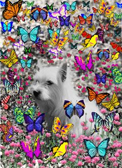 Violet in Butterflies