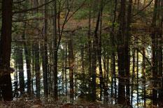 Water Trees I