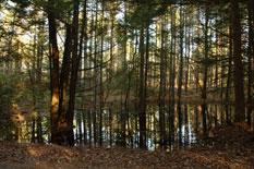 Water Trees II
