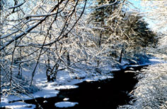 Winterscape I