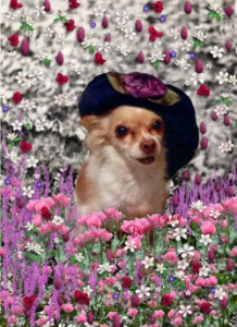 Chi-Chi-in-Flowers-mid
