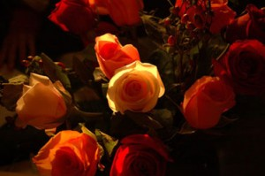 Roses-I-mid